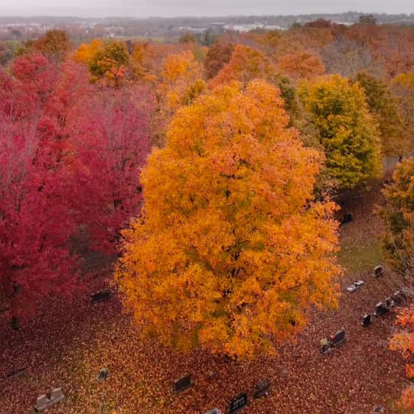 Fall Colors at Maplewood Cemetery