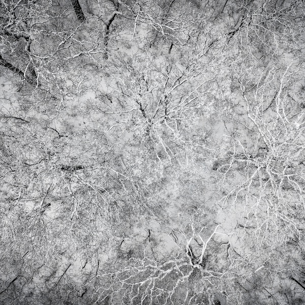 Top Down Winter - 01