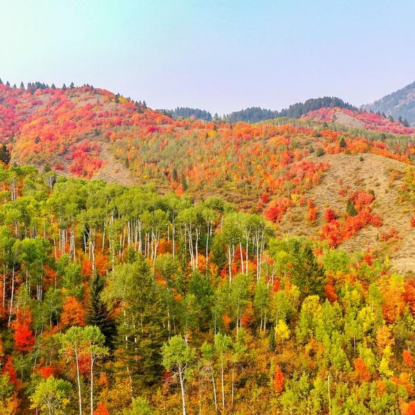 Autumn Trees2